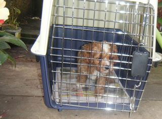 Travel Cage.  $75.00. Offered to my Puppy Buyers.