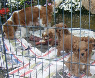 Mum & 1st Generation Babies. Sold